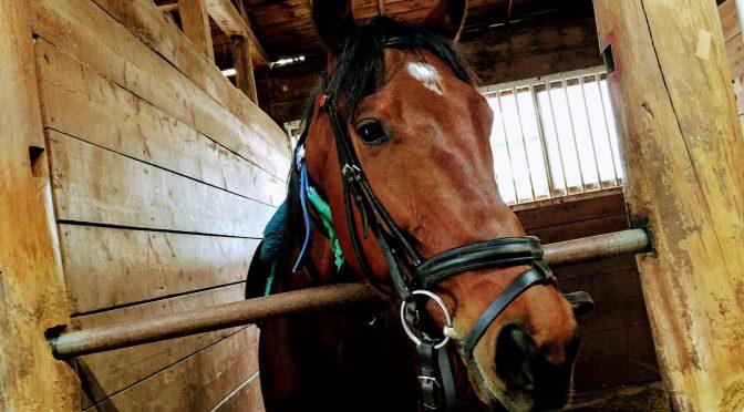 174鞍目‐4歳の馬に乗る、の巻