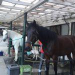 176&177鞍目‐正反対な2頭の馬に乗って