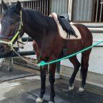 178&179鞍目-初めて自分の鞍で乗馬!!