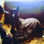 182鞍目-馬が馬房で座り込み…の巻