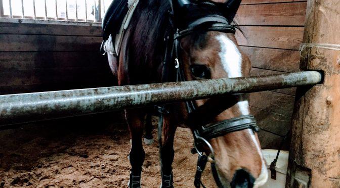 183鞍目―突然の配馬変更!その理由は…