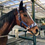 184&185鞍目‐ちょっと意地悪⁈な馬…の巻
