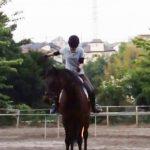 189鞍目-3回目の経路練習(乗馬ライセンス3級)