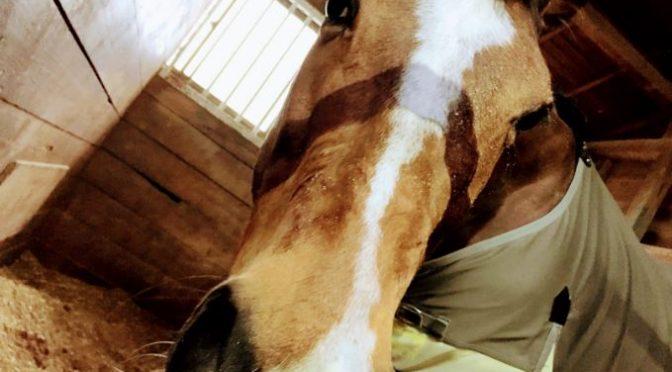 188鞍目‐ちょっと意地悪な馬を馬房から出せるようになる、の巻