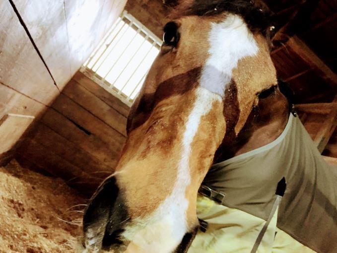188鞍目‐意地悪な馬を馬房から出せるようになる、の巻