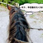 193鞍目-5回目の経路練習(乗馬ライセンス3級)
