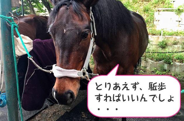 197鞍目-7回目の経路練習(乗馬ライセンス3級)