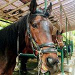 195鞍目-6回目の経路練習(乗馬ライセンス3級)
