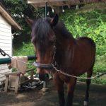 198鞍目-8回目の経路練習(乗馬ライセンス3級)