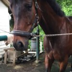 202鞍目‐3週間ぶりの乗馬は居残り練習