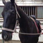 207&208鞍目-つっぱる馬とつっぱらない馬
