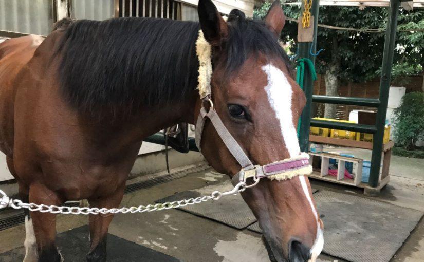 214&215鞍目‐馬にだって機嫌はある(多分)