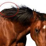 221鞍目‐馬の首の付け根をつかんで騎乗する