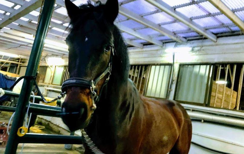 231&232鞍目-ダラダラ歩く馬を自主的に動かすには…
