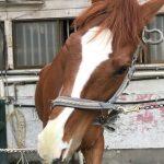 237鞍目‐初めて乗る馬で、さらなる自信喪失