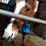 244鞍目-大苦戦中の馬と初の部班レッスン参加