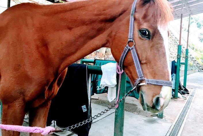 249鞍目-騎乗中、馬の異変に気づけず…