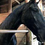 251鞍目‐馬の邪魔をしない