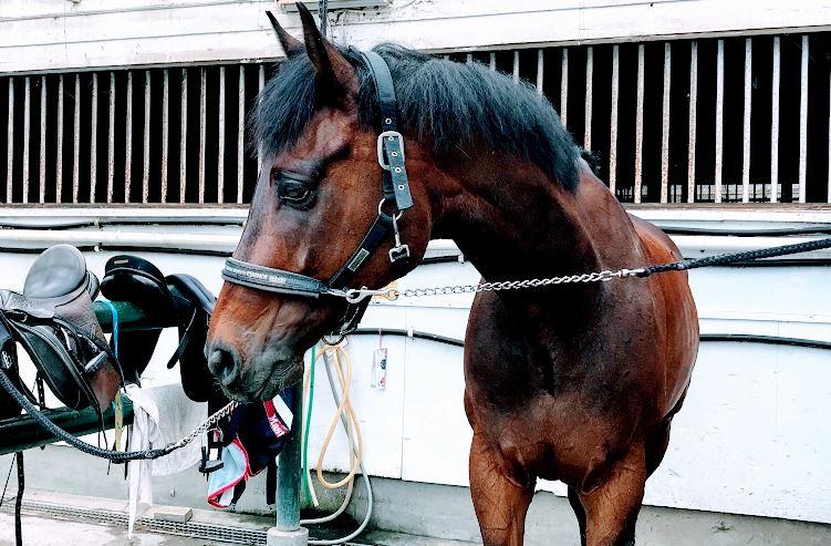 266鞍目‐力を抜いて、馬に身を任せる