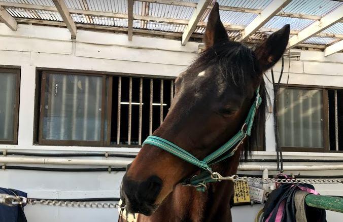 262&263鞍目-ルーティンを大事にする馬?